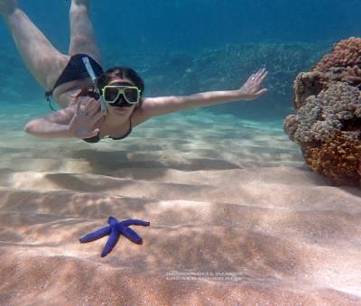 Mission Beach Snorkelling
