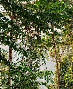 Mission Beach Rainforest
