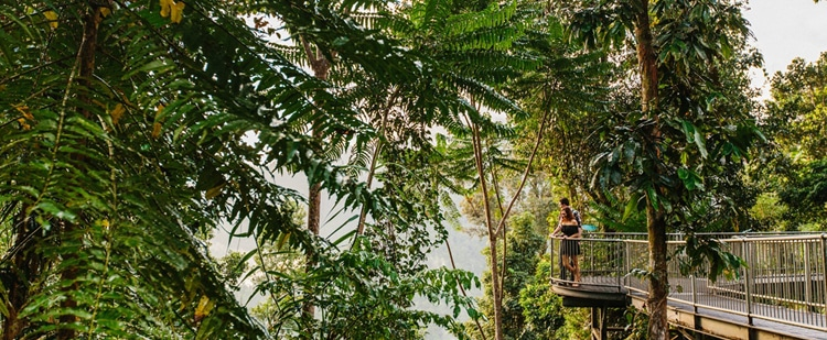 Mission Beach Rainforest & Mamu Tropical Skywalk - Mission Beach Tourism