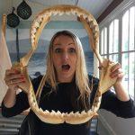 Cairns Museum Shark teeth